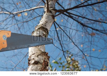 Man Cutting The Branch Of A Tree With A Saw