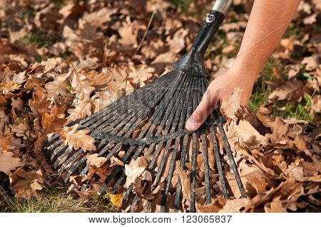 Man raking leaves in the garden. Autumn