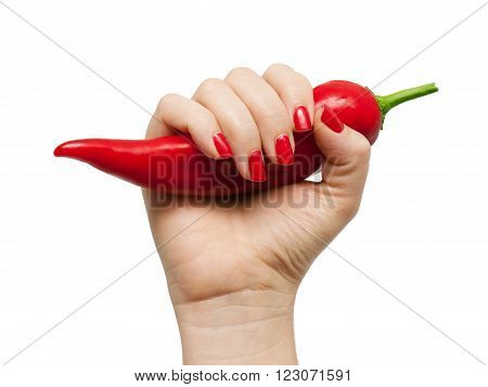 Woman's hand is holding a big red chili pepper on a white background.