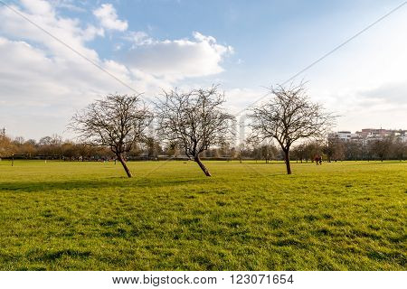Early spring leafless trees at Primrose Hill Park in London England UK