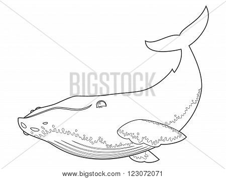 vector illustration of a humpback whale on white background with black outline for kids and coloring book