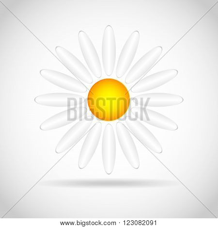 Abstract camomile on white background. Flat daisy - vector illustration.