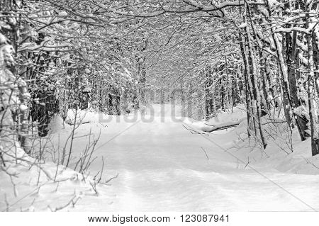 Eastern Townships winter road after a heavy snowfall