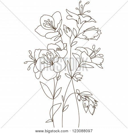 Bouquet Outline Blooming Flowers Sketch Hand Drawing