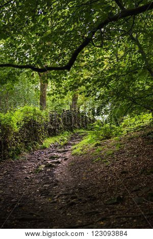 Path In The Woods Near Orrest Head, Windermere, Cumbria, Uk