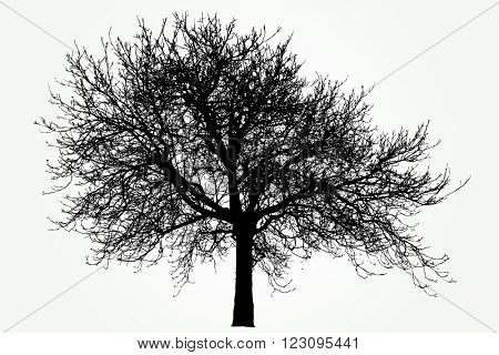 vector drawing of the big naked winter tree