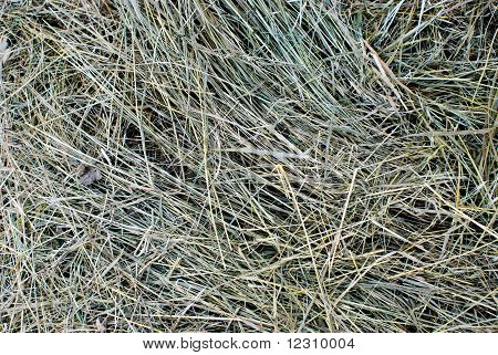 dry mowed down grass lying on the ground