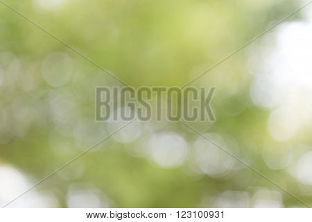 abstract background in shades of green and white