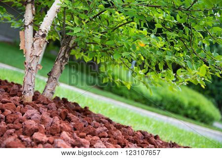 Shallow depth of field on garden landscaping focused of tree foliage