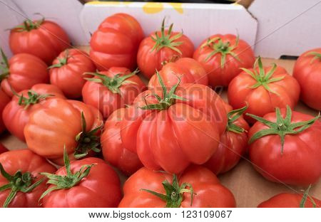 Ox-heart or Bull's Heart  tomatoes at organic farmers market. Israel