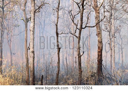 Burnt Trees landscape of forest burned by fire