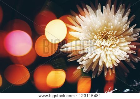 Blurred Nature Background with Flower Arrangement and Bokeh Lights Around. Spa.