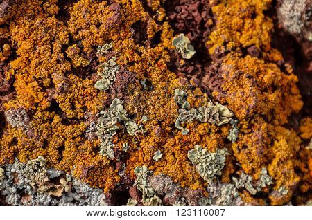 Lichen Texture Pattern Background on the Floor
