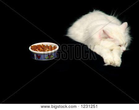 Angora Cat Ignoring Food