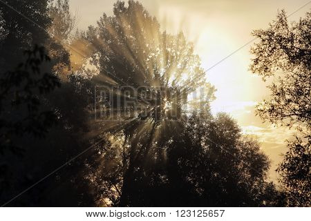 Rising Sun Rays Through The Trees