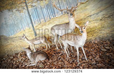 BUDAPEST, HUNGARY, JULY 11, 2015: Diorama of deers inside Hungarian Agricultural Museum (Magyar Mezogazdasagi Muzeum).
