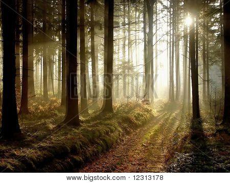Sendero en el bosque del otoño al atardecer
