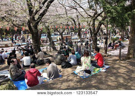Ueno Park Hanami