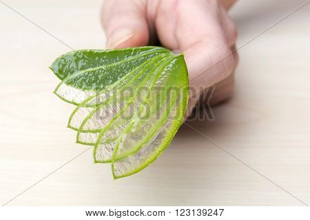 Close up of hands with aloe vera
