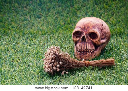 Still life of human skull and dry flower on green grass sign of death/Still life of human skull and dry flower close up