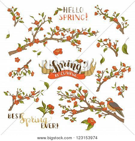 Red blossoms leaves and bird on tree branches. Isolated on white background. Hand-written brush lettering. Best spring ever! Spring is coming.