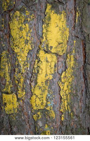 Painted pine bark yellow/ Painted pine bark yellow