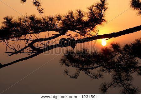 Sunrise with pie tree.