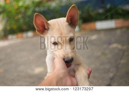 Cutie little Thai dog licked a hand