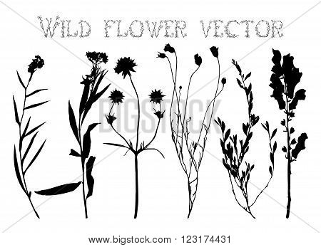 Set black silhouettes of wild flowers and leaves vector illustration