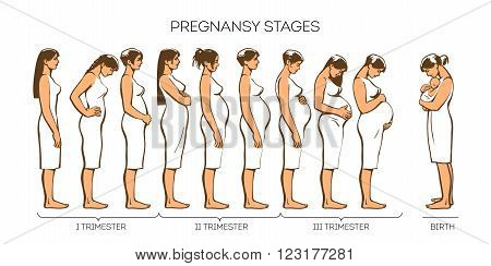 Stages of pregnancy. Vector image of stages of pregnancy. Pregnant woman. Motherhood. Trimester of pregnancy. Nine months of pregnancy. Image of different pregnant women. color illustrations