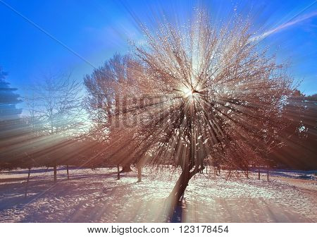 the sun's rays throughout the winter tree