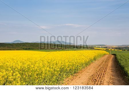 Blue sky above yellow oil-seed rape field near to the country road