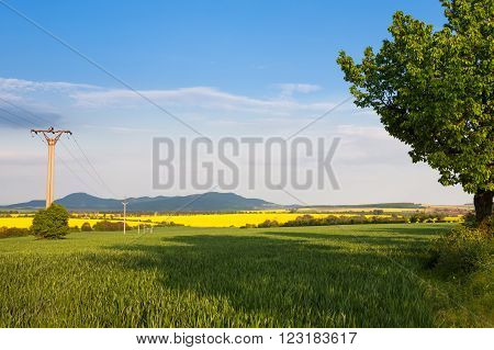 View of yellow oil-seed rape field and green wheat field with blue sky