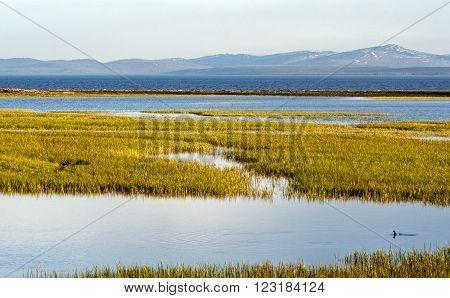 Ducks in Yellowstone Lake in Yellowstone National Park in Wyoming USA