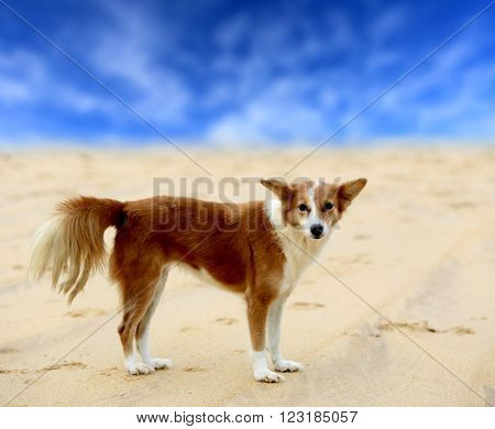 fanny red head dog on sand sea beach