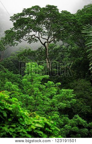 Green forest in misty morning. Phuket, Thailand
