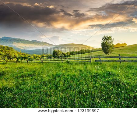 composite rural landscape. fence on the meadow near trees on the hillside. conifer forest on the mountain top in morning light