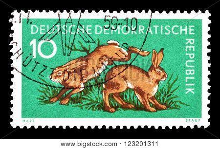 GERMAN DEMOCRATIC REPUBLIC - CIRCA 1959 : Cancelled postage stamp printed by German Democratic Republic, that shows rabbits.