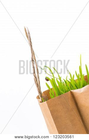 Paper Bag With Fresh Grocery And Ladybug On Green Leaf