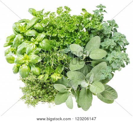 Fresh herbs isolated on white background. Food ingredients. Basil marjoram parsley rosemary thyme sage