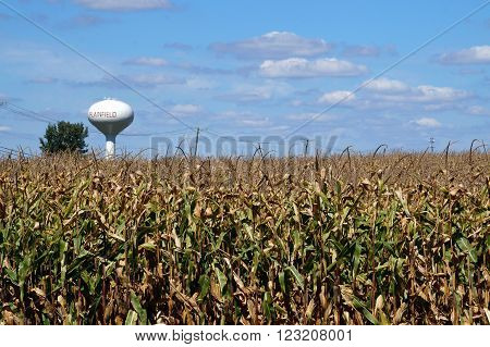 Corn grows in a cornfield in Plainfield, Illinois during September.