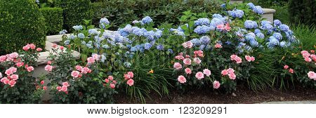 Summer flower bed with roses and hydrangeas.