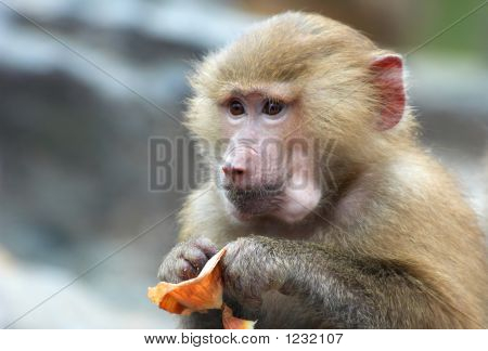 A Cute Monkey Eating