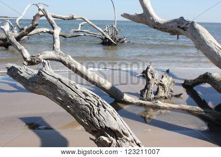 driftwood on shore in Big Talbot Island Florida