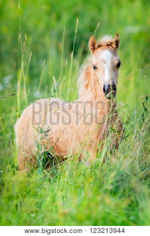 Chestnut foal on green background