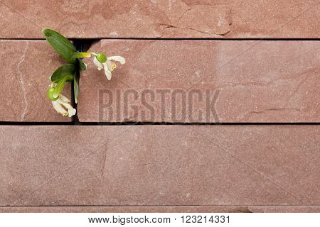 White flower with green leaves makes its way through the black masonry