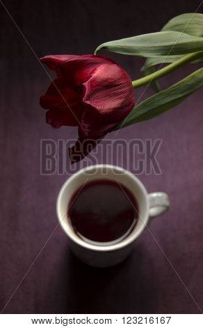 Tulip and cup of tea in marsala tones.