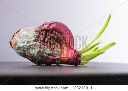 Moldy onions with green sprouts. Never give up