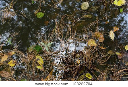 Pool with the needles floating in it leaves and reflection of branches of trees