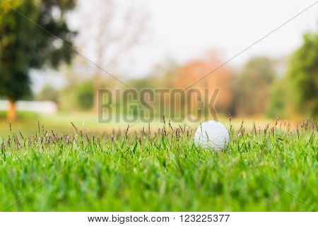 A golf ball is half buried in deep green grass in the rough